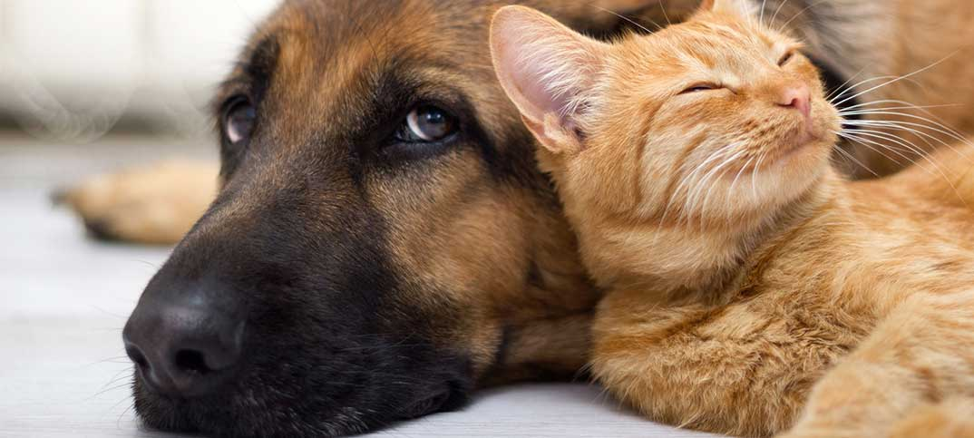 Quiz - Are You Actually a Dog or a Cat Person?