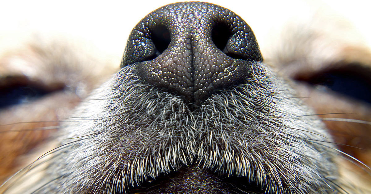 guess the dog by their nose