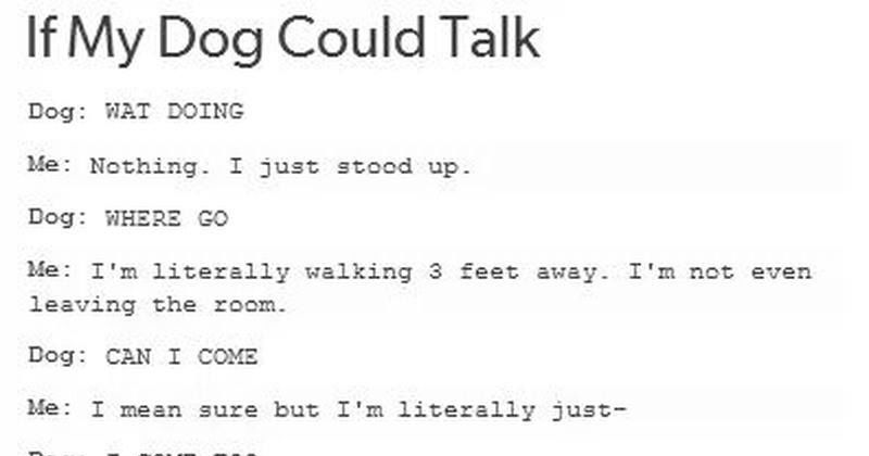 if my dog could talk