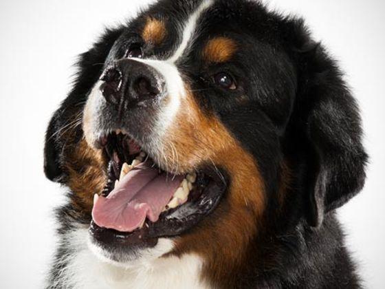 inner dog