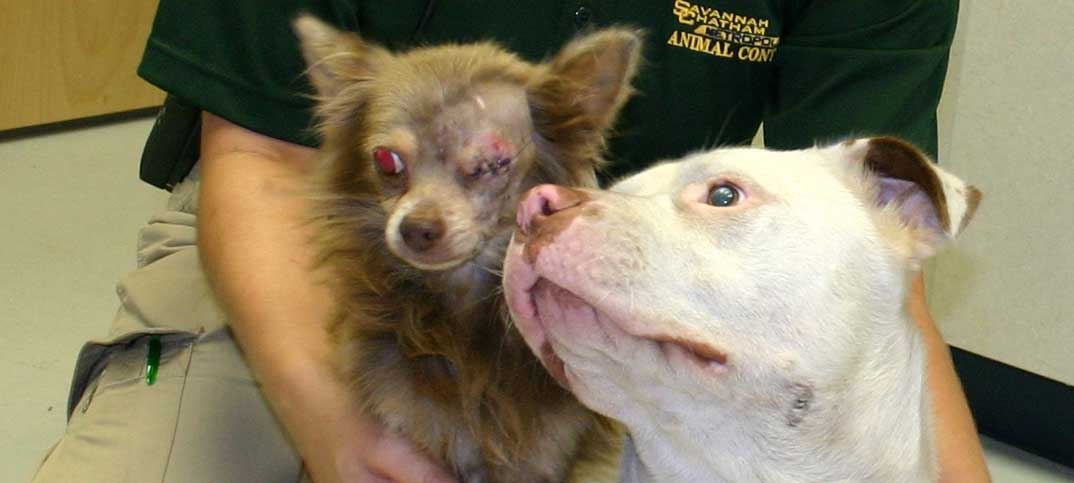 Inspirational - Joanie & Chachi - Pitbull Saves Chihuahua