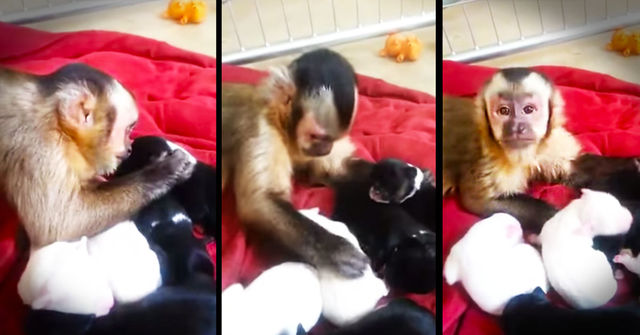 monkey and a puppy