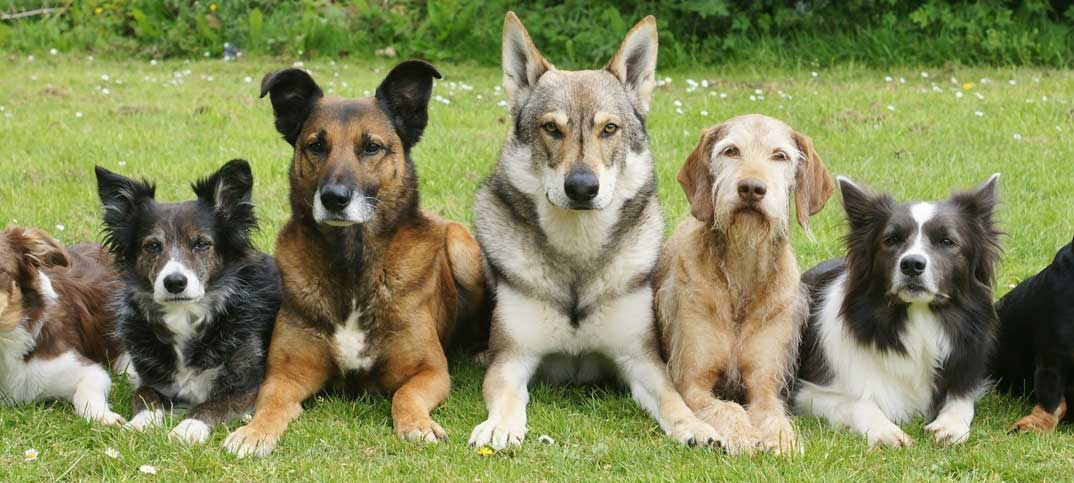 Quiz - Dog Breed Trivia