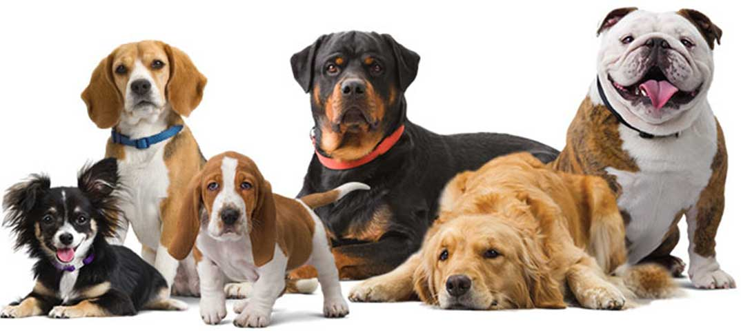 Quizzes - Which Dog Fits You Best