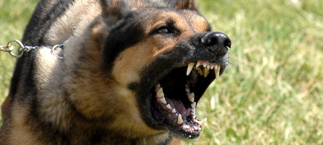 Training - Dog Aggression