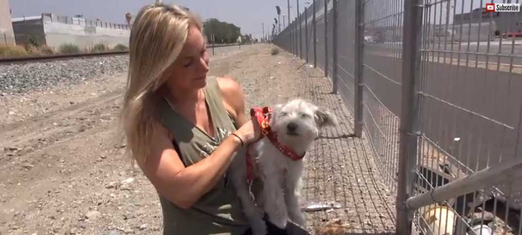 Video - Homeless Dog Rescue