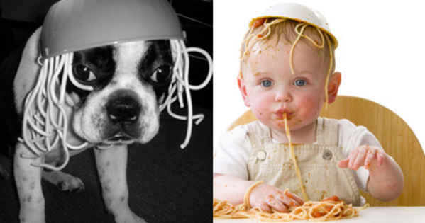 who wore it better dogs or babies